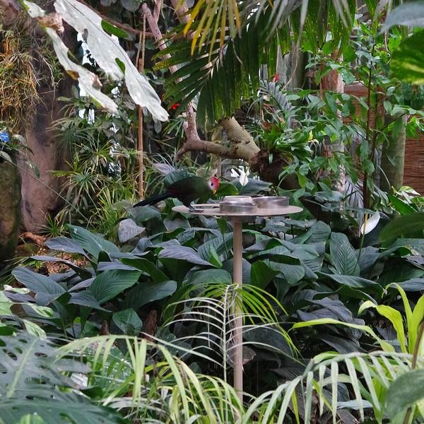 vienne blumengärten hirschstetten serre tropicale