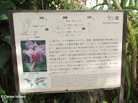Orchids section - Kyoto Botanical Gardens Conservatory, Japan