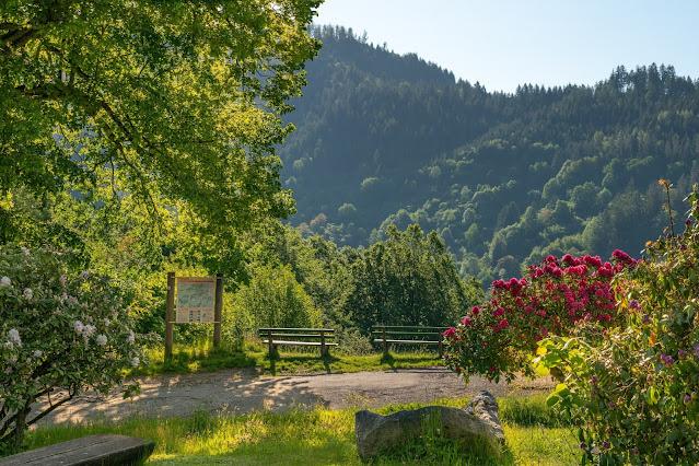 Premiumwanderweg Murgleiter | Etappe 3 von Forbach nach Schönmünzach | Wandern nördlicher Schwarzwald 02