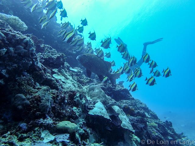 Meno wall - Gili Meno - Bali Lombok