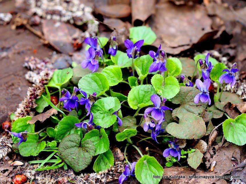 fiolki, kwiaty_jadalne, konfitura_z_platkow, konfitury_fiolkowe, pachnace_kwiatki