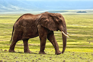 elephant 1421167 480