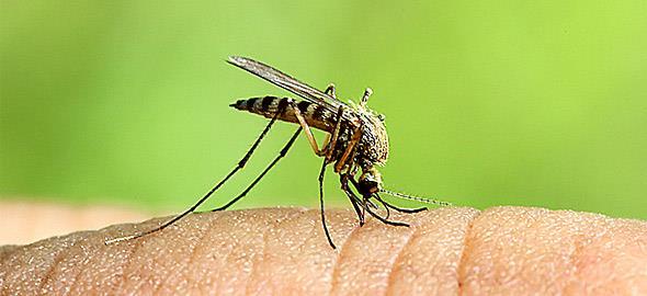 Μέτρα προστασίας από τα κουνούπια