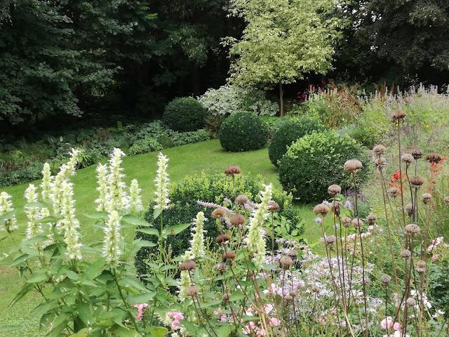 kula bukszpanowa w ogrodzie