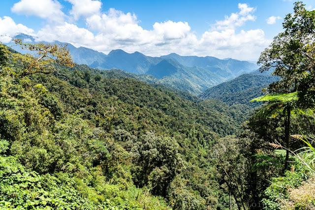 Région de l'Ifugao-Luçon-Philippines