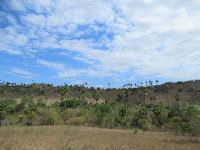 labuanbajo komodo rinca indonesia