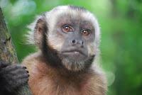 قصص الاطفال قبل النوم | قصة الاصدقاء الثلاثة القرد والكلب  ووحيد القرن