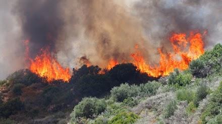 WWF: Η πρόληψη θα σώσει τα δάση μας αλλά τα κονδύλια συνεχίζουν να πηγαίνουν στην καταστολή των πυρκαγιών