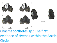 https://sciencythoughts.blogspot.com/2019/08/chasmaporthetes-sp-first-evidence-of.html