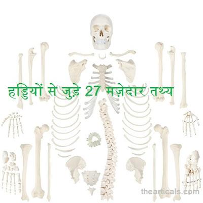 हड्डियों से जुड़े 27 मज़ेदार तथ्य, 27 fun facts related to bones