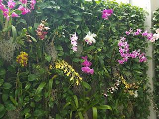 Orchid wall, Kahala Hotel, Oahu, HI