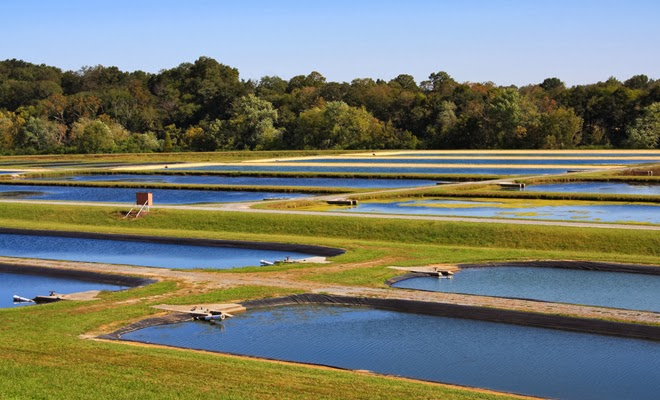Economics of aquaculture for Koi pond zoning
