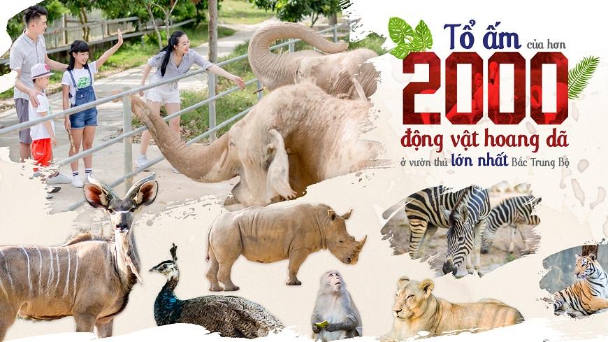 khu-vuon-thu-safari-zoo-thanh-ha-cienco5