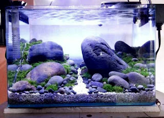 Batu Kali Jenis Batu untuk Aquascape