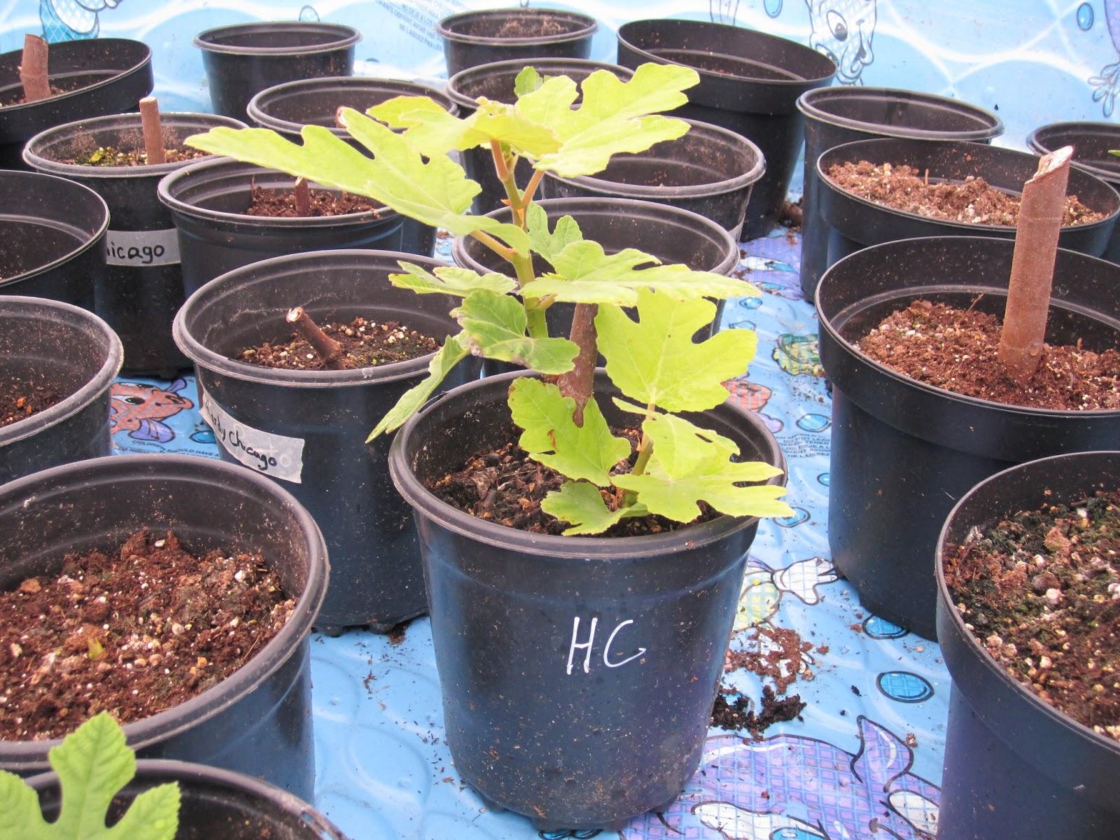 Hp Pro Mix Potting Soil