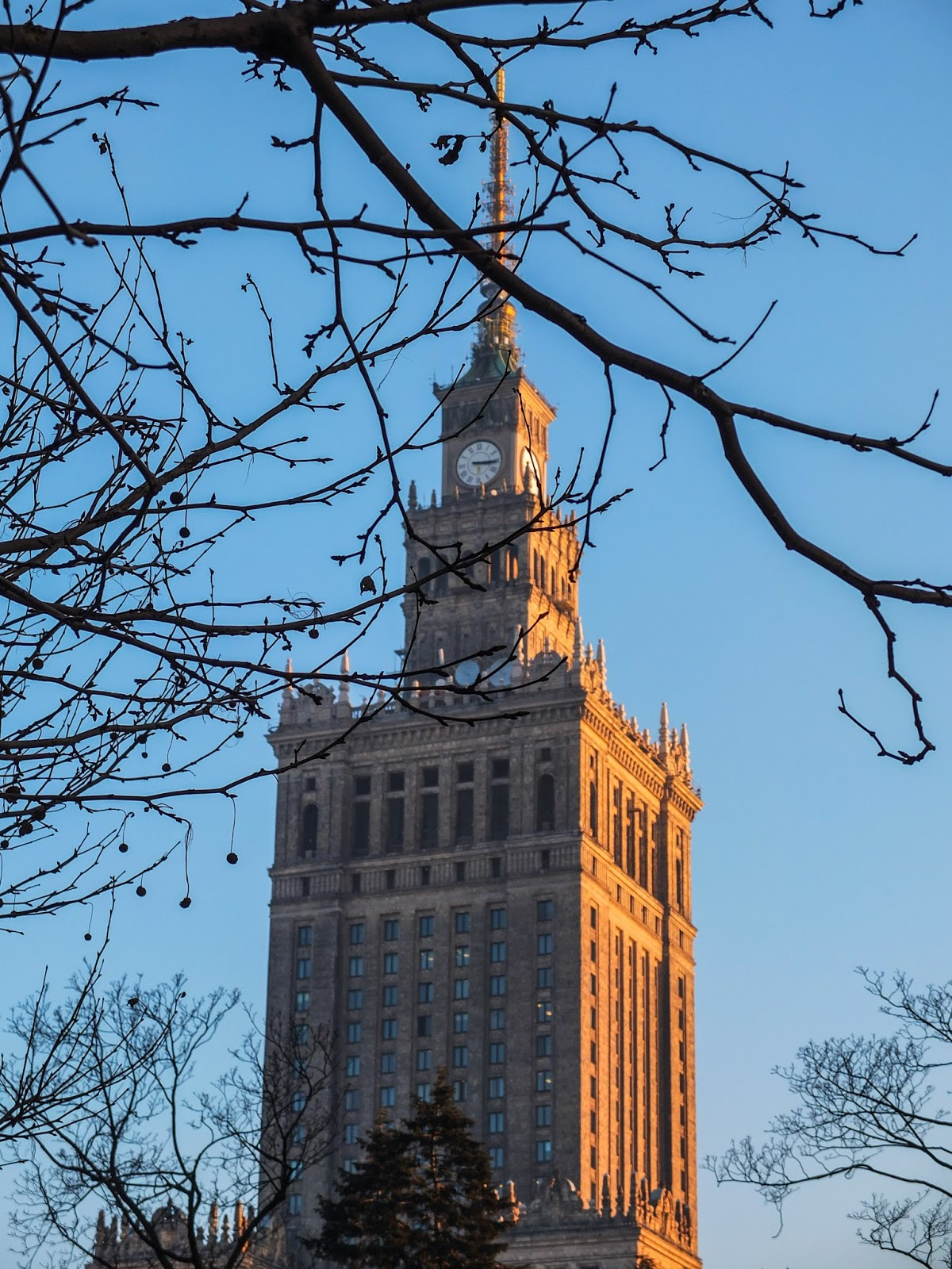 View of the Palace of Culture tower taken through tree branches at sunset.