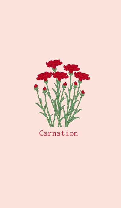 The warmth of carnations