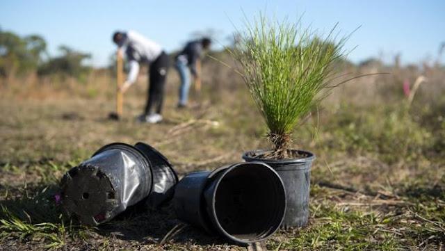 Filipinas aprueba ley que exige a estudiantes plantar diez árboles para poder graduarse