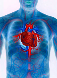 Heart Facts with Ayurveda
