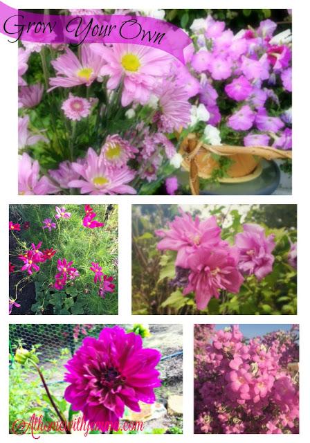 purple flowers in Jemma's garden