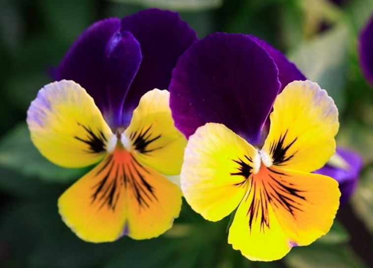 Most Beautiful Flowers