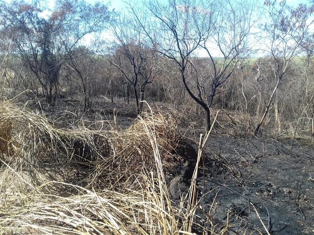 Usina de cana-de-açúcar leva multas de mais de R$ 360 mil por incêndio em áreas de lavoura e de preservação ambiental
