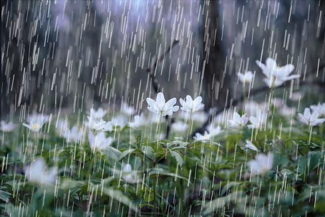 Air hujan baik untuk tanaman