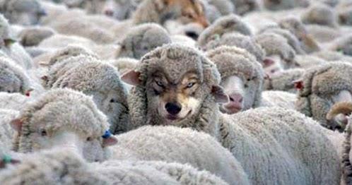 Vengono a voi in veste di pecore ma dentro son lupi rapaci - La pagina della colorazione delle pecore smarrite ...
