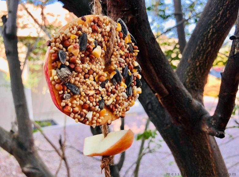 Apple bird feeder nature craft for kids