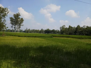 Agricultural land pictures