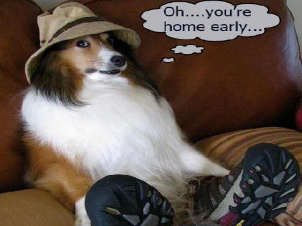Wallpaper funny animals wallpapers 2 - Funny animal wallpapers ...