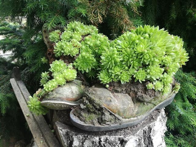 ozdoby w ogrodzie wiejskim, pojemniki na rośliny