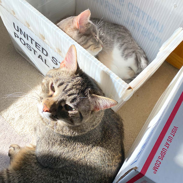 Toulouse and Marlowe helping pack orders at Newton's Nook Designs headquarters.