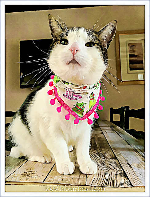 Real Man Cats Wear PINK - Melvyn Modelling at BBHQ ©BionicBasil® Caturday Art