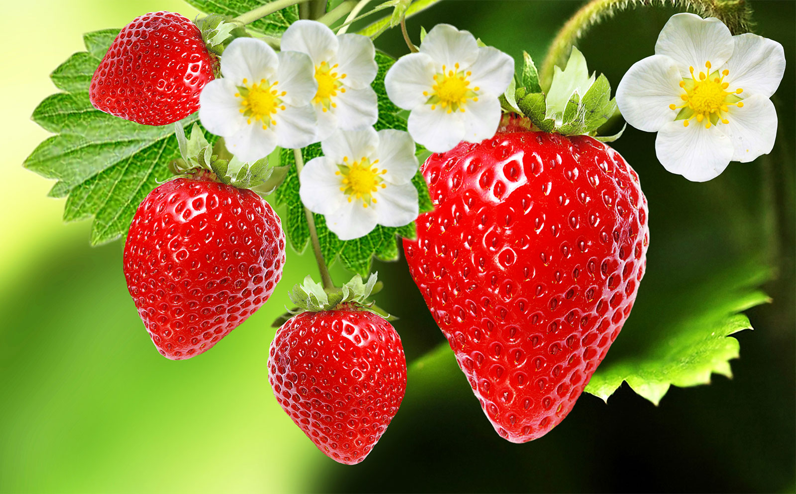 Sobre esto y aquello: Fresas: decenas de frutos en una fruta