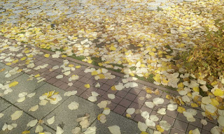Yellow leaves on the floor