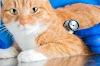 Calicivirose felina: o que é, qual o tratamento e como evitar?
