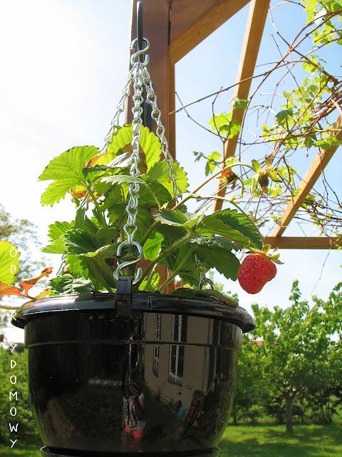 plastikowe doniczki, ogród przydomowy, ogród za grosze
