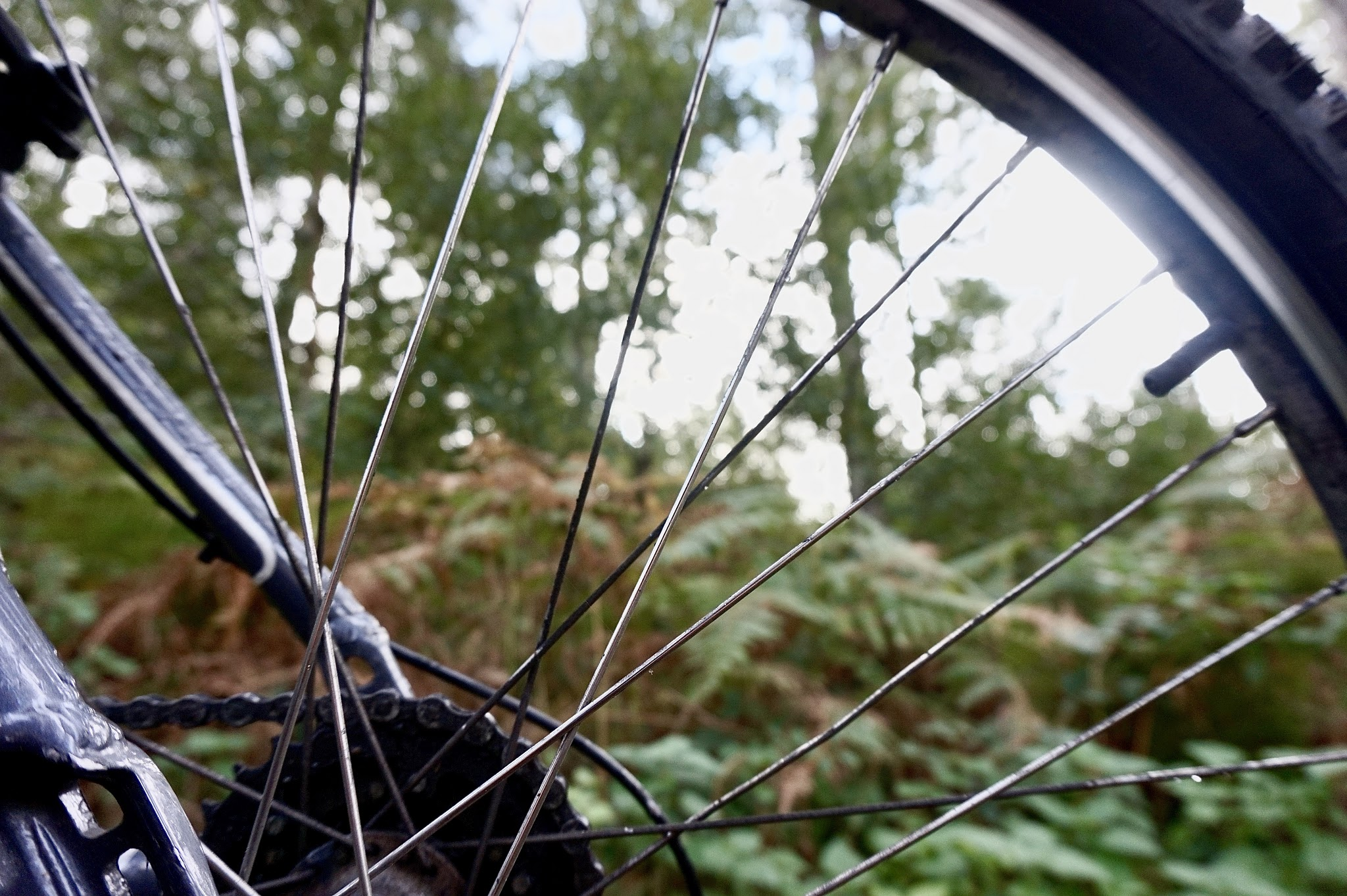 forest floor through bike spokes