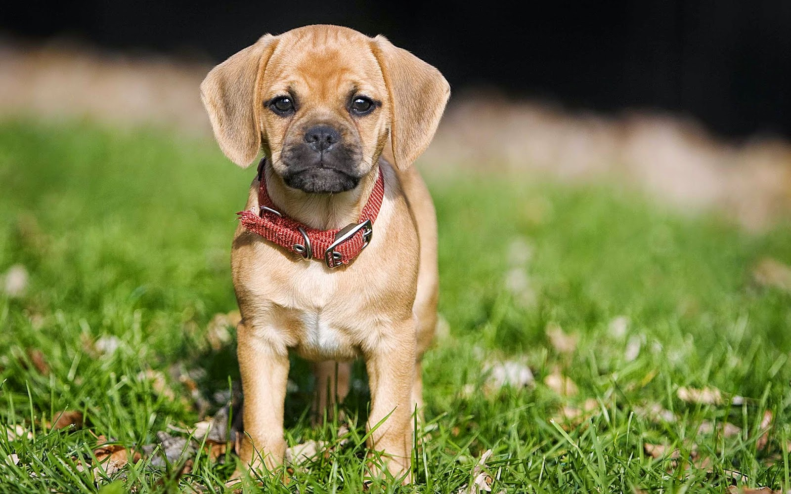Bruin hondje in de tuin