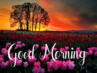 Good Morning Royal Images Download for Whatsapp Facebook94