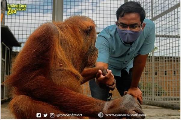 Medan Zoo Jamin Ginting