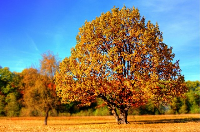 Pohon yang rindang