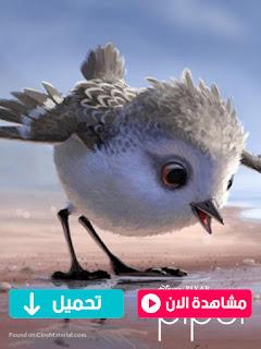 مشاهدة وتحميل فيلم بايبر Piper 2016 مترجم عربي