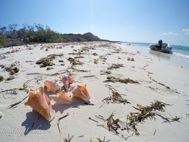 Conch shells with dinghy on beach, Bahamas