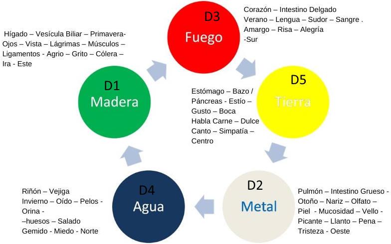 Relacion entre diatesis y cinco elementos