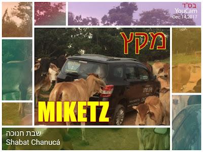 Miketz- Shabat Chanucá