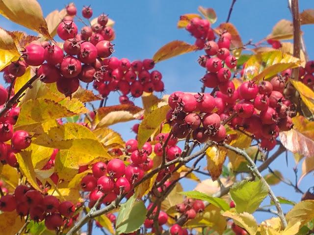 Autumn colour in the sunshine