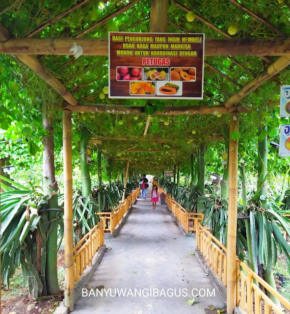 Agrowisata Astaga Dragon Banyuwangi