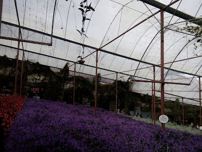 Lavender Garden
